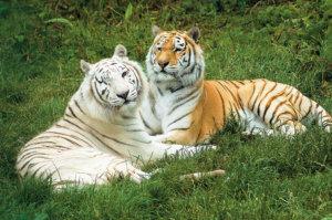 Zena-and-Zia--Isle-of-Wight-Zoo